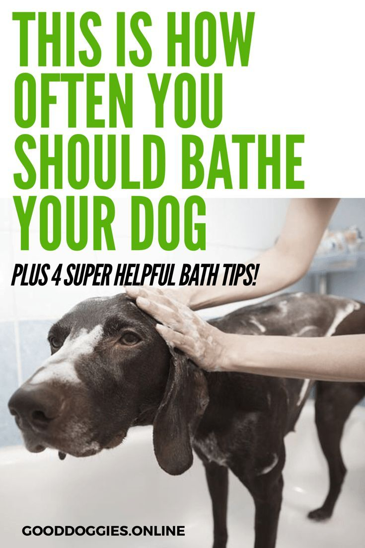 How Often To Bathe A Dog Dogs Dog Care Your Dog