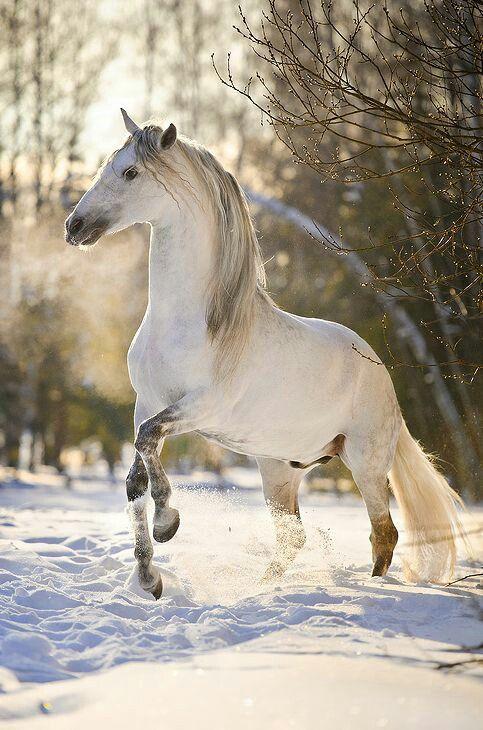 714 besten horses bilder auf pinterest pferde sch ne. Black Bedroom Furniture Sets. Home Design Ideas