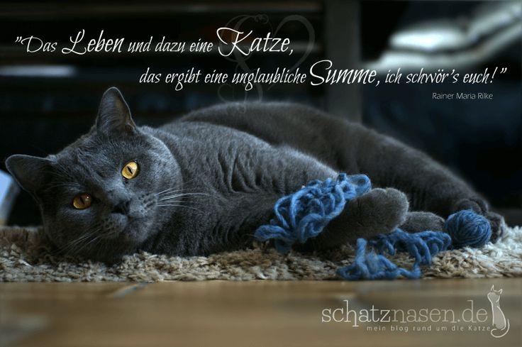 Das Leben und dazu eine Katze… #spruchbilder #spruchbilderkatzen #katzenspruchbilder #katzensprüche #katzenzitate #katzenweisheiten