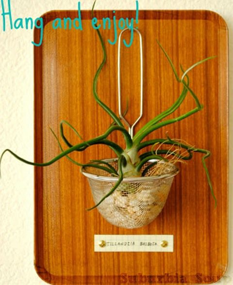 How To Make An Air Plant Display                                                                                                                                                      More