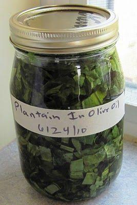 """Grandma Called it """"Medicine Leaf"""" - Common Sense Homesteading"""