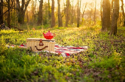 Shady trees, dreamy sunlight, adorable red teapots and a wicker basket!
