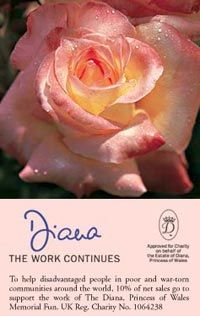 Princess Diana Rose Hybrid | What is your favorite color rose? Why?