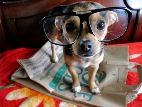 Brooklyn Hipster Puppy