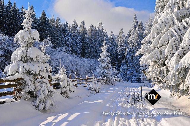 Christmas Screensavers and Wallpaper - Bing images