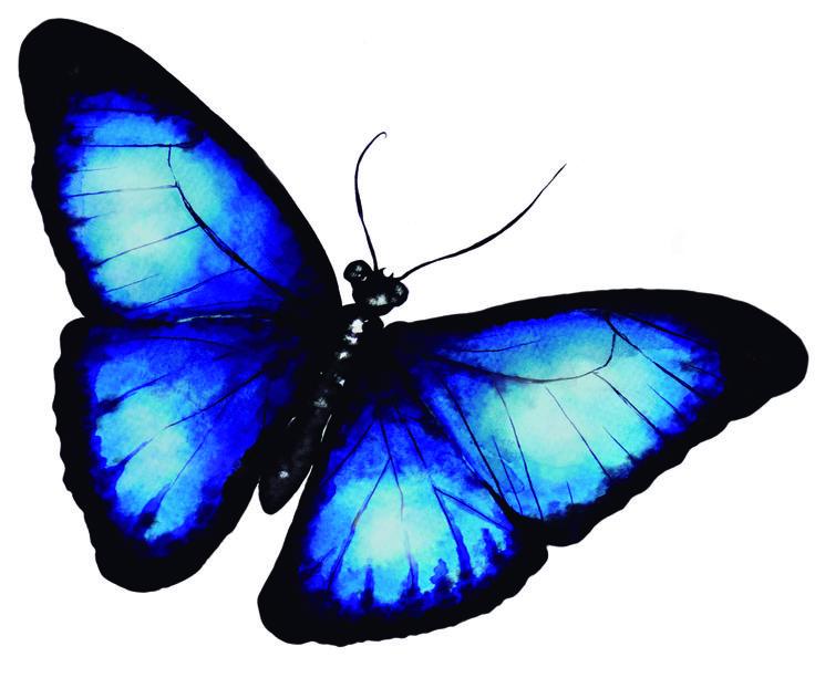 Mariposa morfo azul, Acuarela y Photoshop