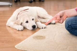 SteamKleen: Carpet stain management and steam cleaning