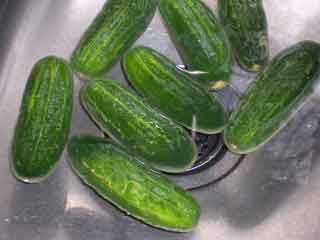 half sour pickle recipe- like Ted's Montana Grill