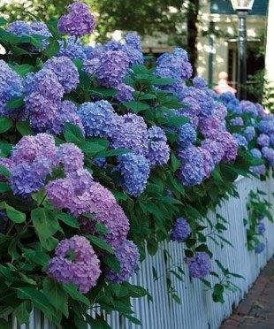 Beautiful  Flower Story's photo