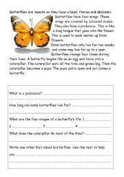 reading comprehension worksheets butterfly google search butterfly exhibit nature study. Black Bedroom Furniture Sets. Home Design Ideas