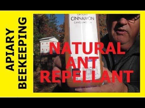 HOMESTEAD BEEKEEPING - Natural Ant Repellant