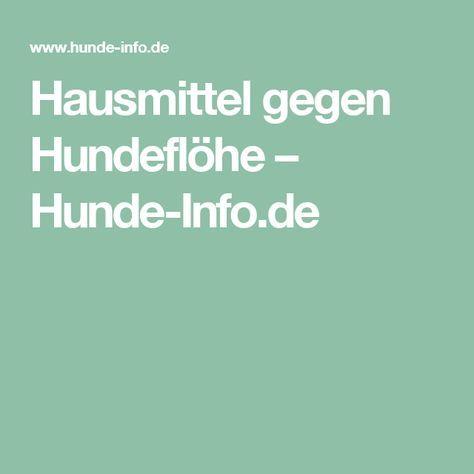 Hausmittel gegen Hundeflöhe – Hunde-Info.de