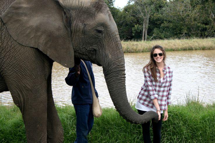 Plett Elephant Park