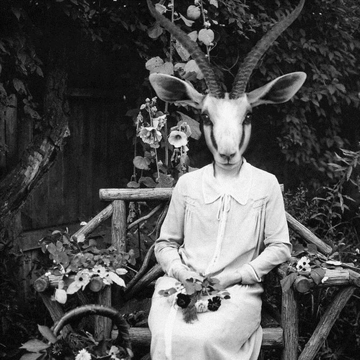 Old Victorian Portraits With Animal Heads