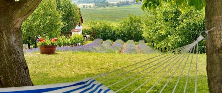 Kis Alma Ház | Catherine's Vineyard Cottages