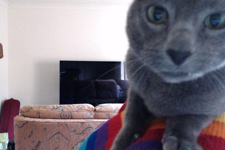 My cat Smokey's warm welcome