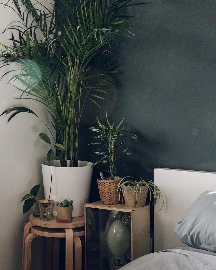 The 25+ Best Bedroom Plants Ideas On Pinterest