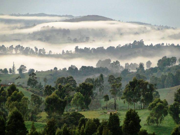 Bosque de Niebla - Entrerrios