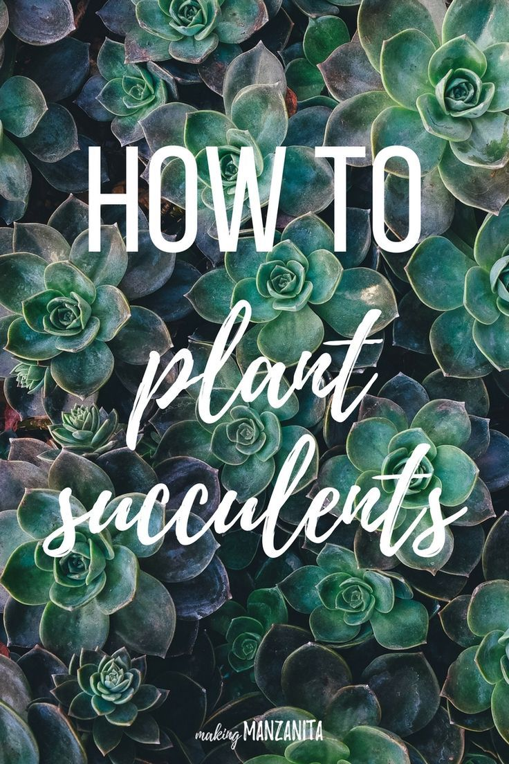 What we did to turn a little flower bed in a fun succulent planter. This will show you exactly how to plant succulents.