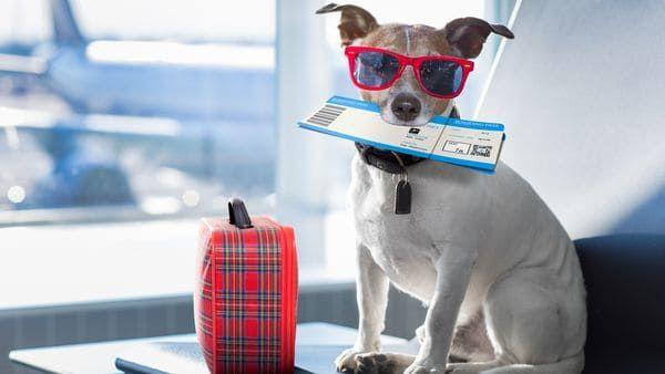Un cachorro fue abandonado en un baño de aeropuerto junto a una desgarradora nota que explica los motivos