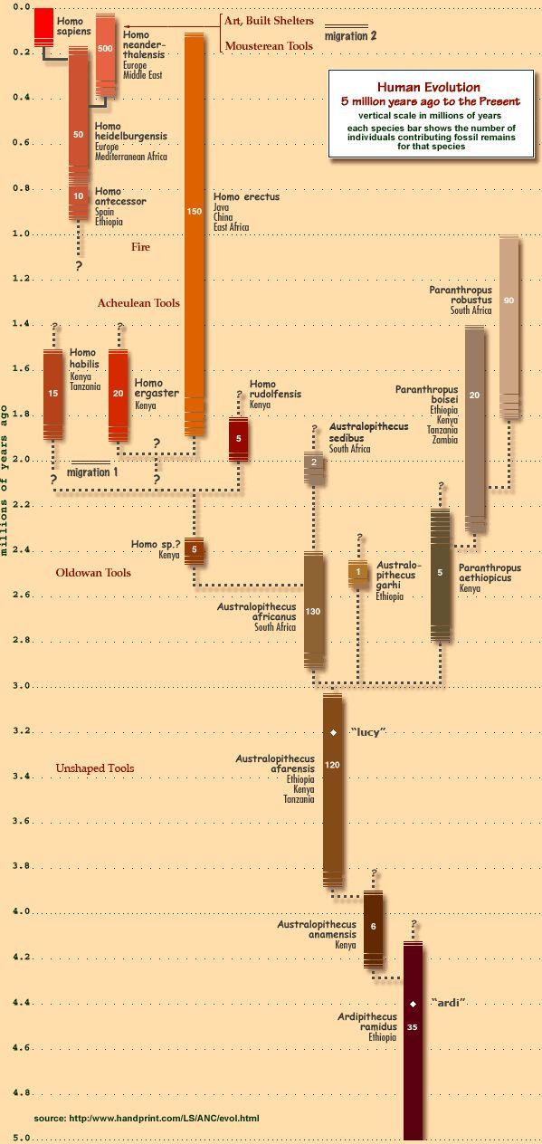 Timeline of hominin evolution