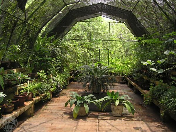 Greenhouse Ideas Pictures