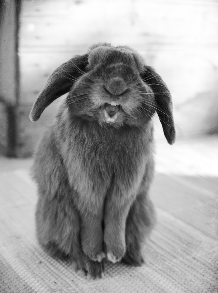 337 best My dream pets! images on Pinterest | Baby bunnies, Bunny ...