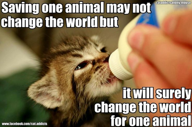 Why I can't say no to bottle kittens Veterinarian quotes