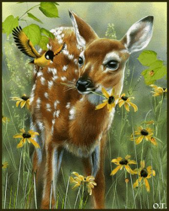 A DEER EATING WILDFLOWERS - GIF