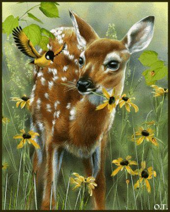 A DEER EATING WILDFLOWERS - GIF
