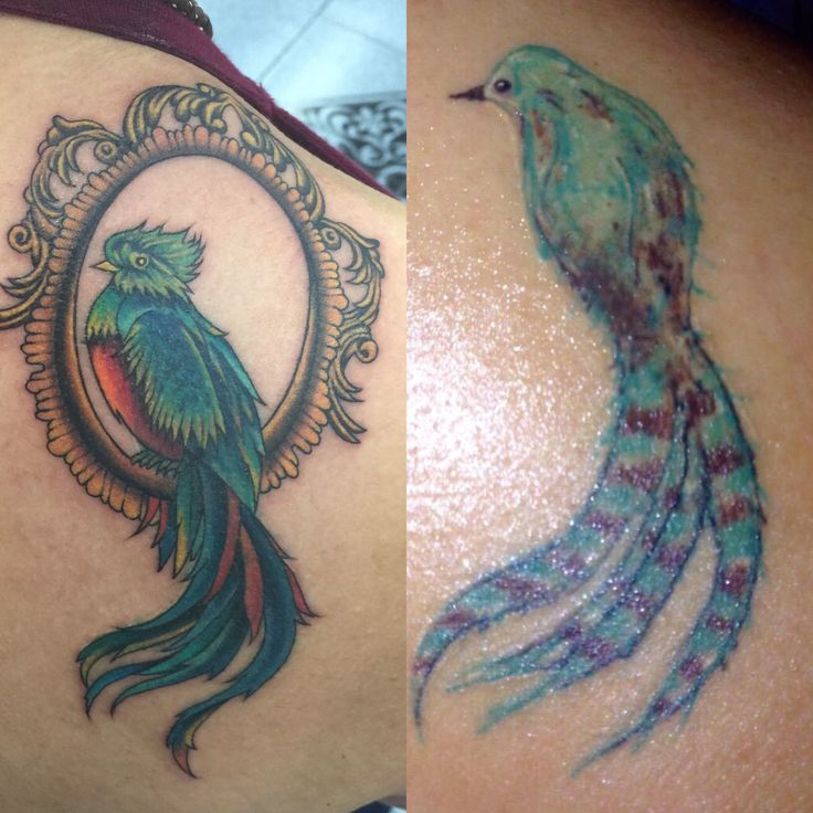 Best 25 Vegan Tattoo Ideas On Pinterest: 25+ Best Ideas About Quetzal Tattoo On Pinterest