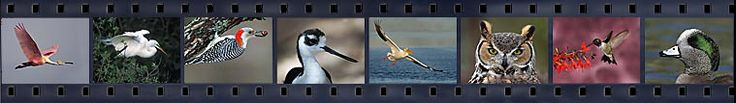 birds of corpus christi texas - photography by Juan Bahamon