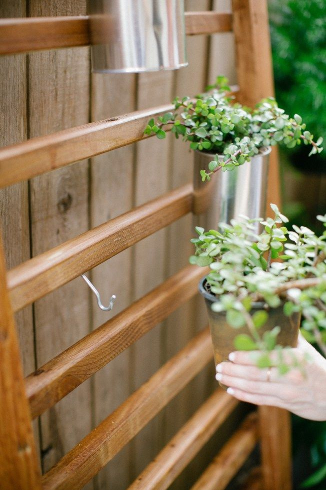 1000 Ideas About Succulent Wall On Pinterest Wall