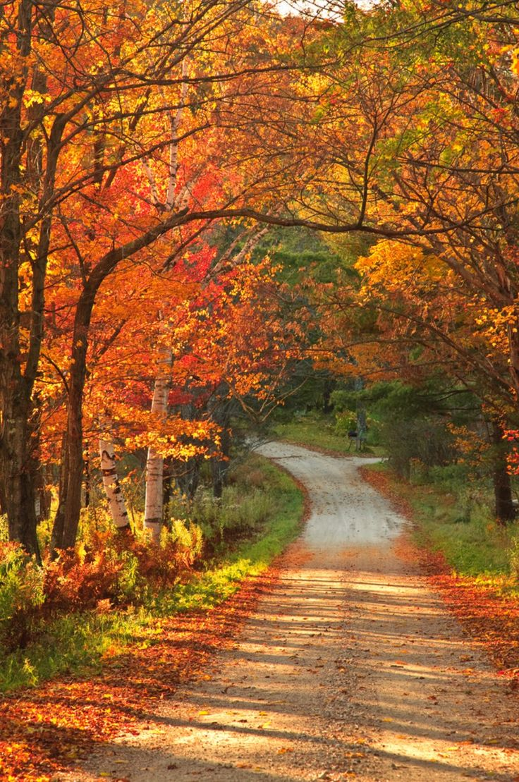 Fall colours on country road (Vermont) by enfi