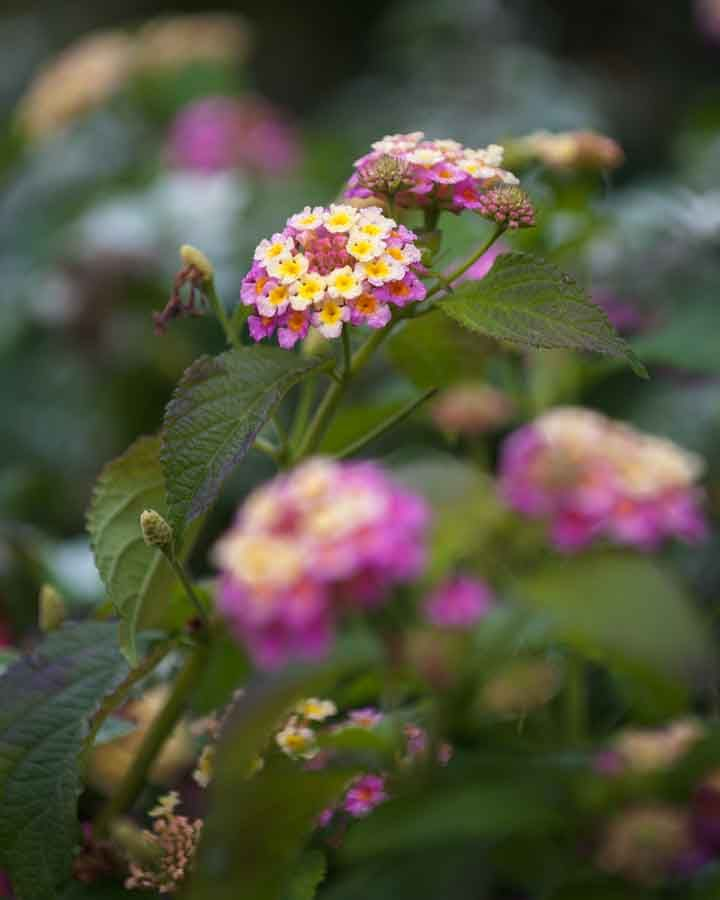 Little pink and yellow flowers. Image©K Woodland/K Woodland Photography.