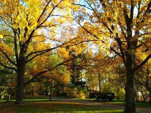 Tarvaspää in autumn