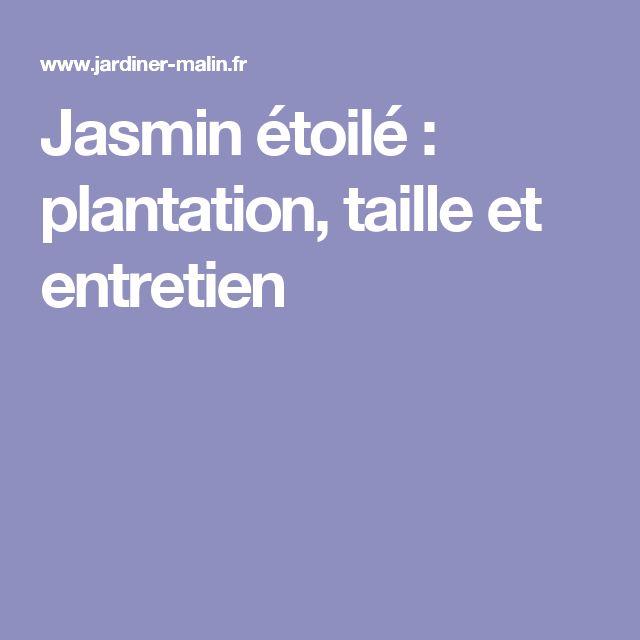 Jasmin étoilé : plantation, taille et entretien