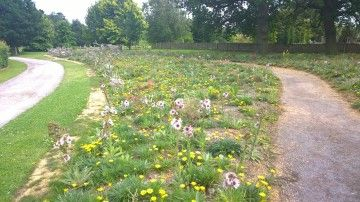 The odd gap in the meadow - well, it can happen when you plant from seed.