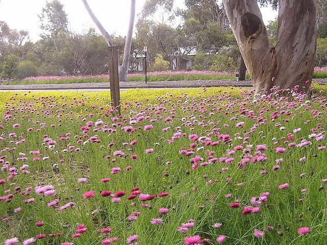 wild flower meadow by Miles.18, via Flickr