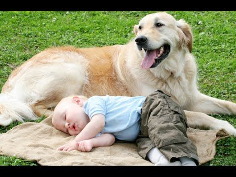 Dogs Playing Babysitter [video] - http://www.pawsforpeeps.com/dogs-playing-babysitter-video/