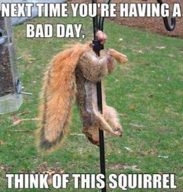 Having a Bad Day? Think of Him. - Squirrel Gets Balls Caught Searching for Nuts  ---- I feel sorry for the little guy! ...and nuts...