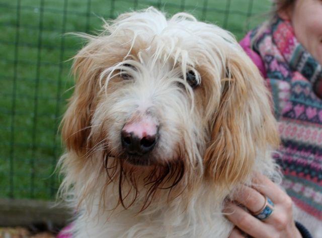 Ravel, cane da film, adorabile, cerca casa! info: adozioni@leudica.org / ADOTTATO / ADOPTED!