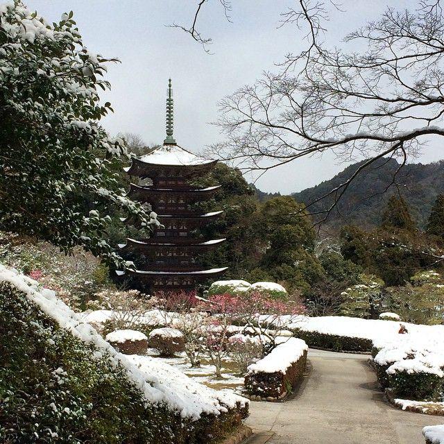 #瑠璃光寺 #五重の塔 #山口県 #viewnow🏯 #Rurikoji Temple and Five-Storied Pagoda  This Five-Storied Pagoda is the 10th oldest pagoda in Japan, and it is also counted as the 3rd most beautiful pagoda in Japan. #temple #pagoda