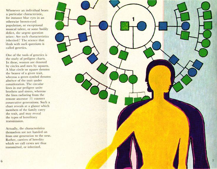 """https://flic.kr/p/81R78o   Warja Honegger-Lavater Illustration 4   Genetics. From the Visuals series, 1961. Blogged at <a href=""""http://aqua-velvet.com/2010/05/science-1961-part-3/"""" rel=""""nofollow"""">Aqua-Velvet</a>."""