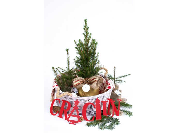 Aranjament Molid conic - Craciun - Colectii plante si flori - Plante Cadou