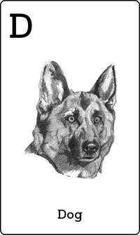 Animal 4D+ Card Dog