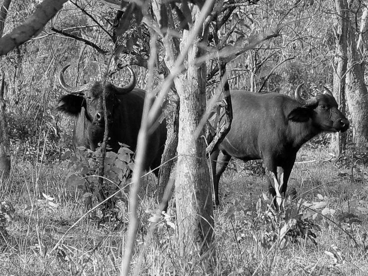 Wildlife / Africa Photo: Kata Tumbász