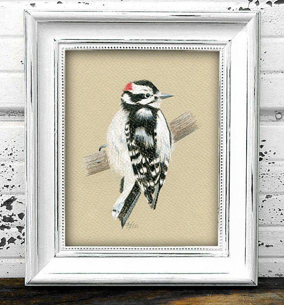 Downy Woodpecker Original Colored Pencil Drawing  Bird Art