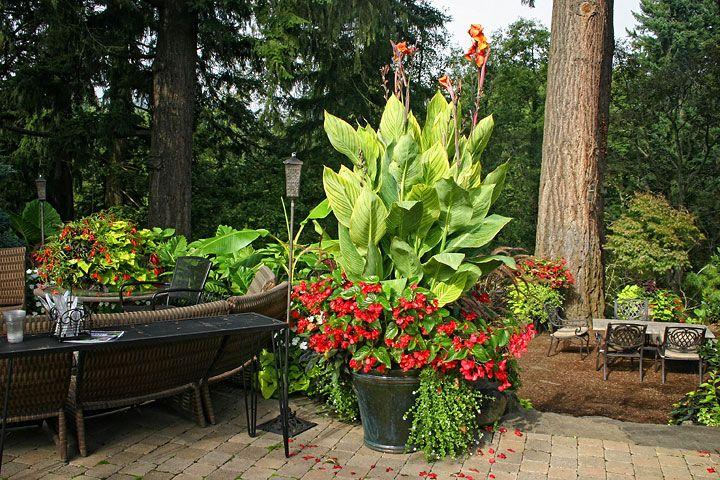 canna pretoria and begonia container mclane garden pinterest pretoria. Black Bedroom Furniture Sets. Home Design Ideas
