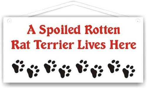 A Spoiled Rotten Rat Terrier Lives Here